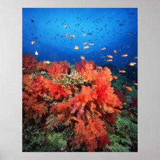 Coral y pescados póster