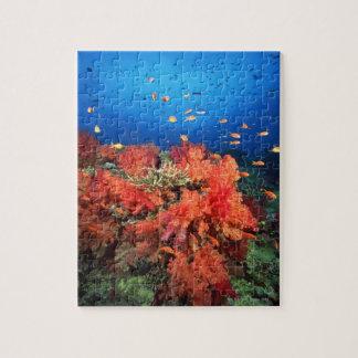 Coral y pescados rompecabezas