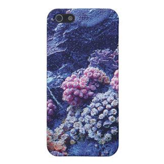 CoralBeauty iPhone 5 Carcasa