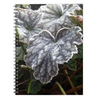 Coralbells - Pewter Veil with Frost Spiral Note Books