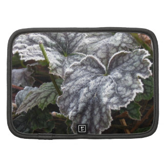 Coralbells - Pewter Veil with Frost Planners