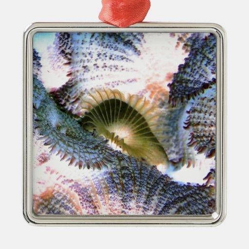 Corales del agua salada con colores invertidos adorno cuadrado plateado