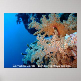 Corales del clavel poster