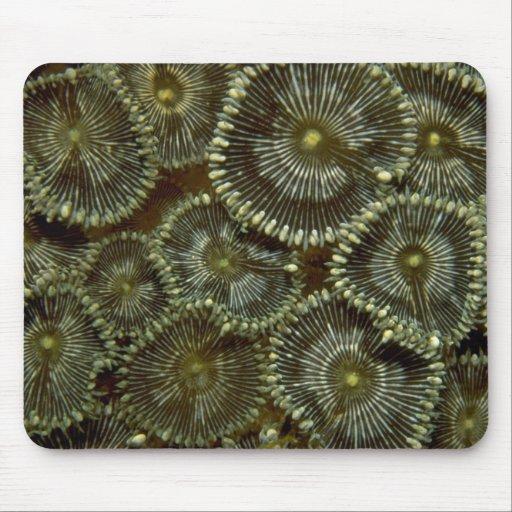 Corales duros hermosos de Indonesia Tapete De Raton