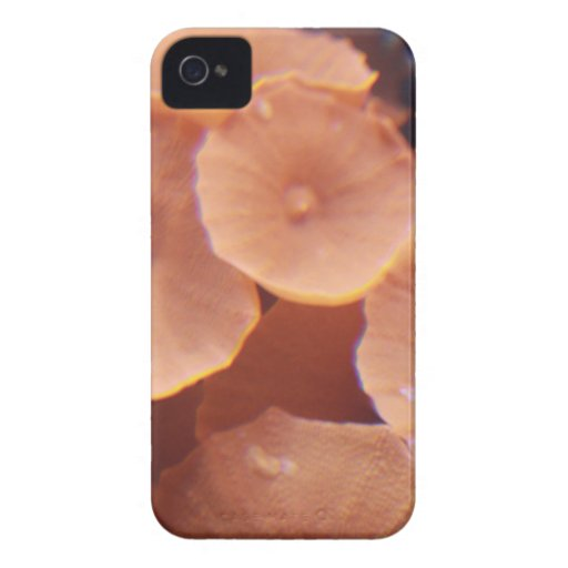 Corales iPhone 4 Case-Mate Protector