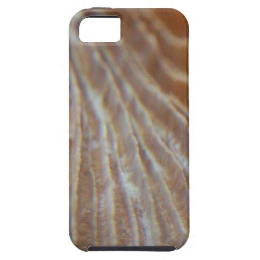 Corales iPhone 5 Coberturas