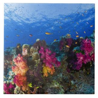 Corales suaves en el filón bajo, Fiji Azulejo Cuadrado Grande