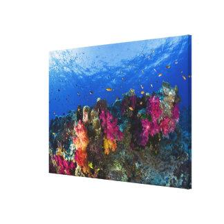 Corales suaves en el filón bajo, Fiji Impresiones En Lienzo Estiradas