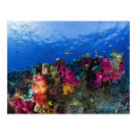 Corales suaves en el filón bajo, Fiji Postal