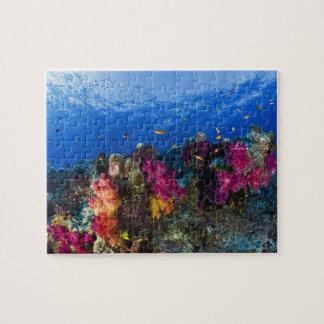 Corales suaves en el filón bajo, Fiji Rompecabezas Con Fotos