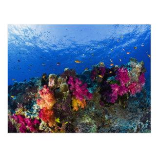 Corales suaves en el filón bajo, Fiji Tarjeta Postal