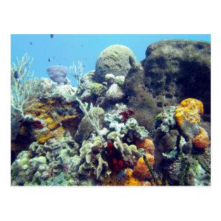 Corals Paradise Reef Cozumel Yucatan, Mexico City Postcard