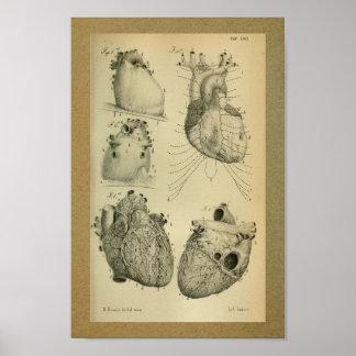 Corazón 1850 del ser humano de la impresión de la póster