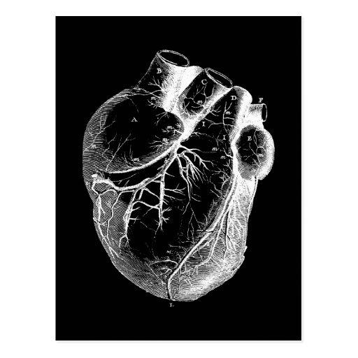 Corazón anatómico correcto tarjeta postal