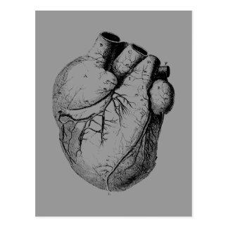 Corazón anatómico correcto postal