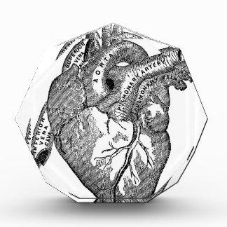 Corazón anatómico del vintage