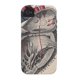 Corazón anatómico del vintage iPhone 4/4S carcasa
