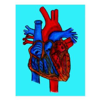 Corazón anatómico dibujado mano de la aguamarina postal