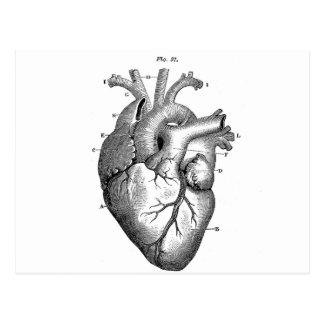 Corazón anatómico negro tarjetas postales