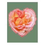 Corazón color de rosa rosado tarjeta postal