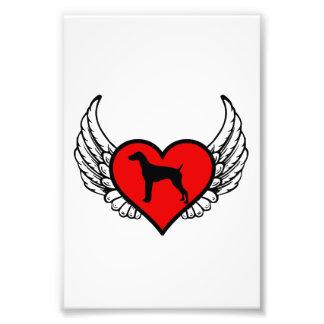 Corazón con alas alemán del indicador de pelo foto