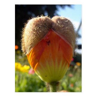 Corazón de la amapola tarjetas postales
