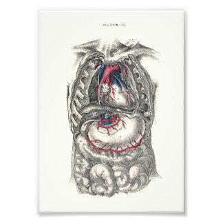 Corazón de la impresión de la anatomía de 1895 ser fotografía