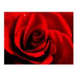 Corazón de un color de rosa postales