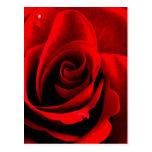 Corazón de un color de rosa tarjeta postal