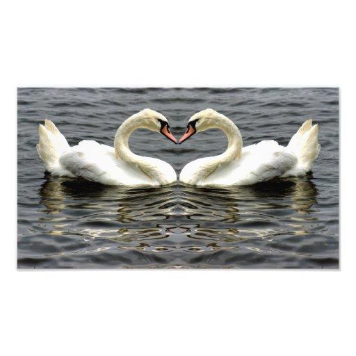 Corazón del cisne mudo arte fotografico