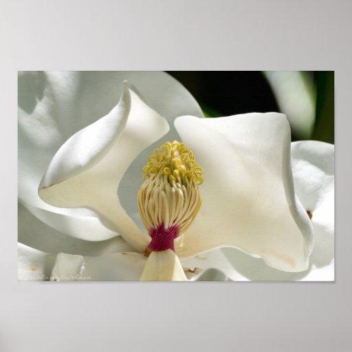 Corazón del poster de la magnolia meridional