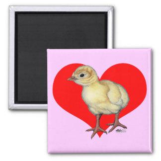 Corazón del Poult de Turquía Imanes