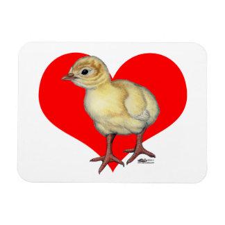 Corazón del Poult de Turquía Imanes De Vinilo