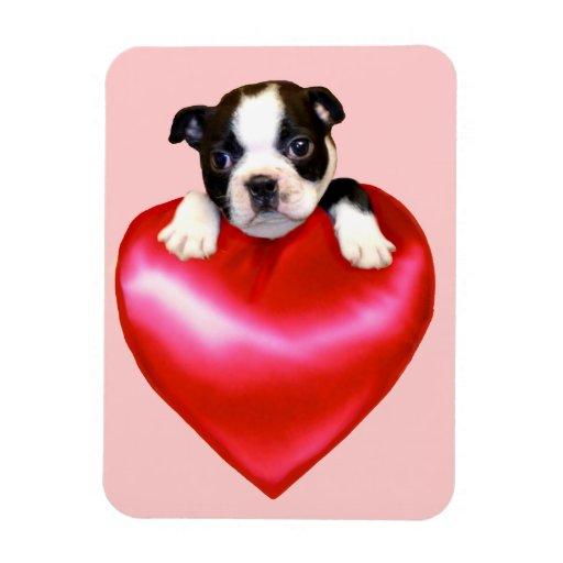 Corazón del terrier de Boston Imán Foto Rectangular