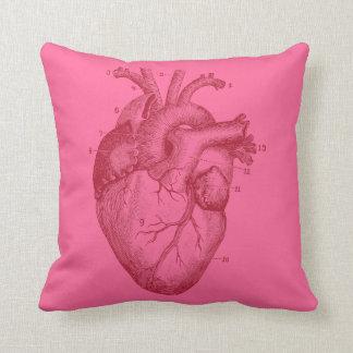 Corazón humano - anatomía cojin