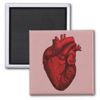 Corazón humano anatómico imán cuadrado