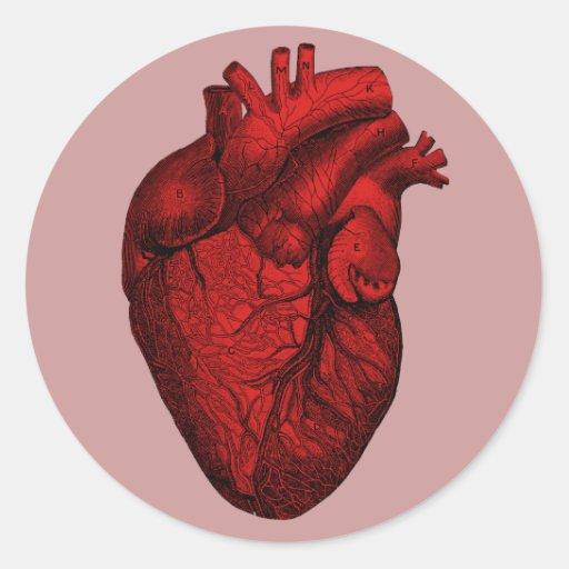 Corazón humano anatómico pegatina redonda