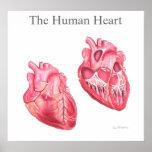 Corazón humano - ejemplo médico poster