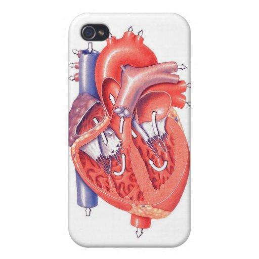 Corazón humano iPhone 4 cárcasas