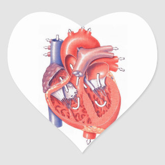 Corazón humano pegatina en forma de corazón