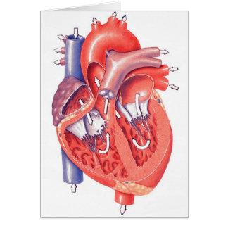 Corazón humano felicitación