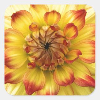 Corazón macro de una flor de la dalia pegatina cuadrada