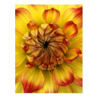 Corazón macro de una flor de la dalia postales