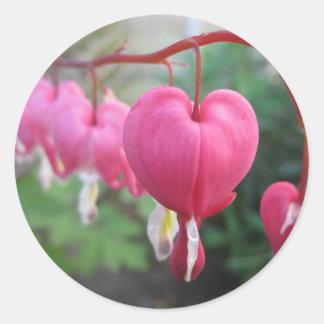 Corazón sangrante (Dicentra) Pegatina Redonda