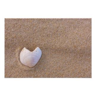 Corazón Shell Cojinete