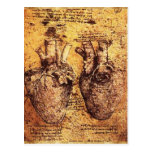 Corazón y su pergamino de los vasos sanguíneos postal