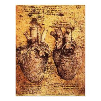 Corazón y su pergamino de los vasos sanguíneos tarjeta postal