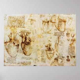 Corazón y sus vasos sanguíneos póster