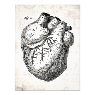 Corazones cardiacos retros de la anatomía del cora fotografías