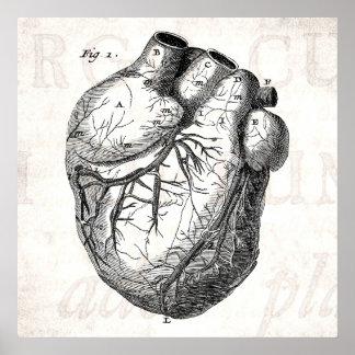 Corazones cardiacos retros de la anatomía del cora posters